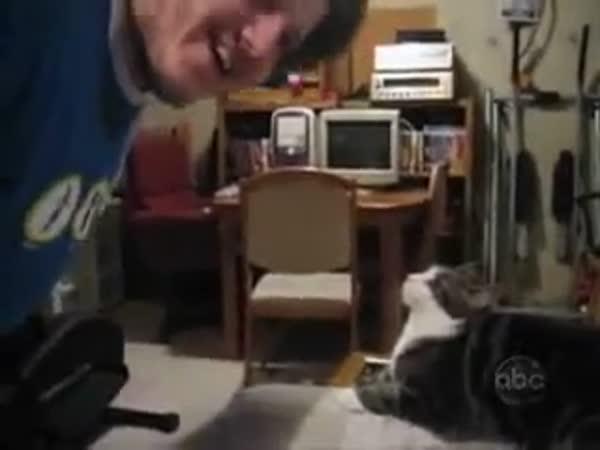 Co vše dokáží kočky