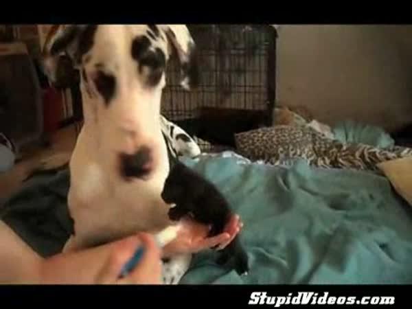 Pes se pere s kotětem