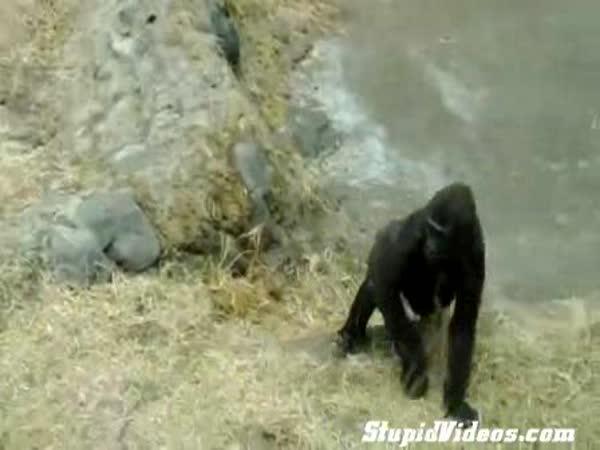 Vylekaný opičák