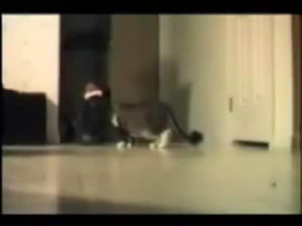 Kočky a kočkování #2 (kompilace)