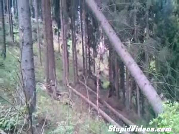 Jak kácí stromy profesionál