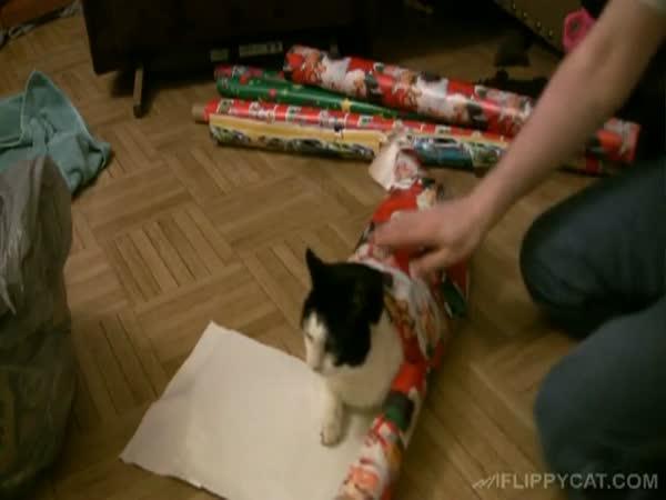 Jak zabalit kočku k Vánocům