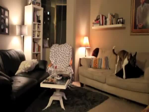 Co dělá Váš pejsek, když je doma sám