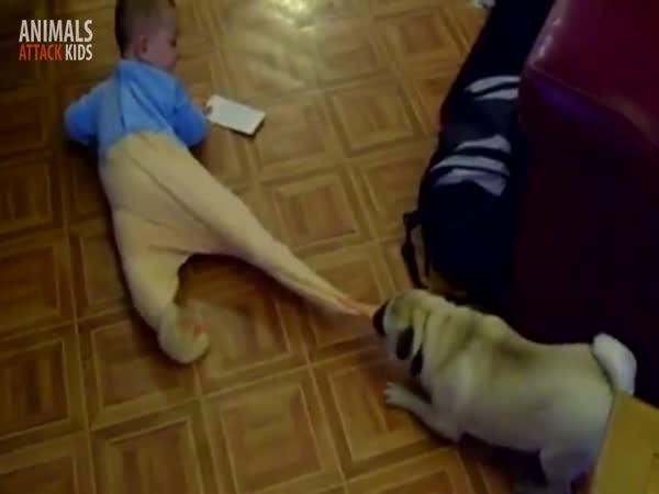 Děti vs. zvířátka
