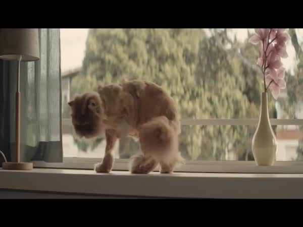 Reklama - kočka miluje Toyotu