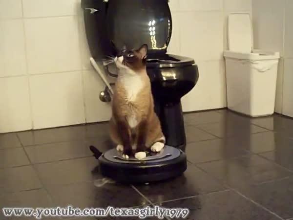 Kočka používá iRobota uklízeče