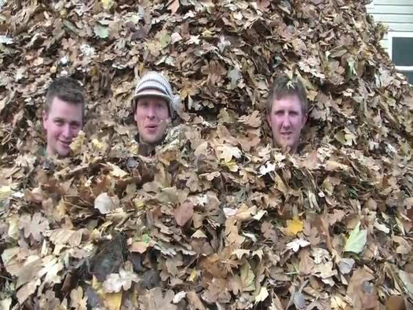Největší hromada listí na světě