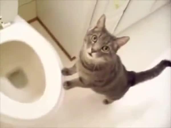 Splachující kočky