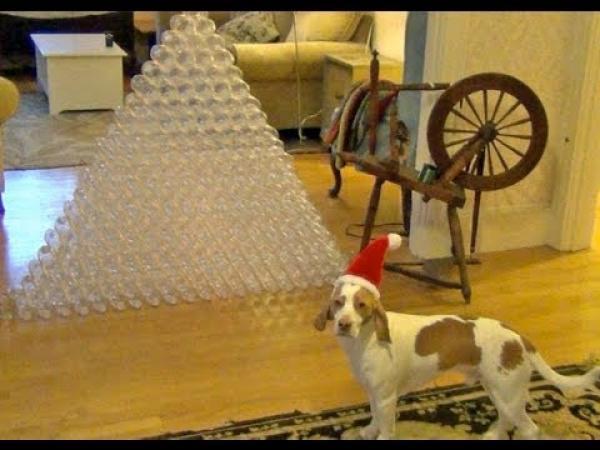 Pes vs. PET láhve