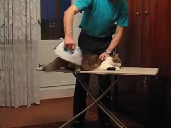Rusko - Masáž kočky