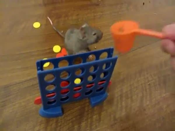 Chytrá myš