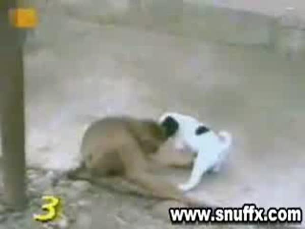 Opička se vysměje pejskovi