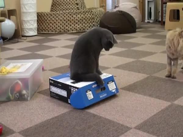 Zlomyslná kočka #2