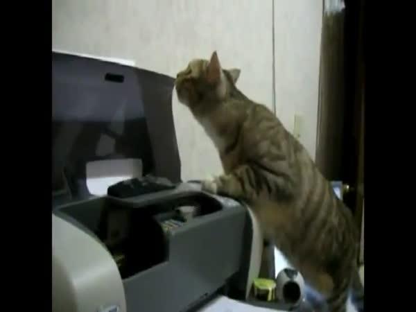Kompilace - Kočky vs. tiskárny