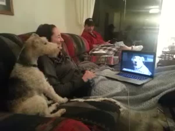 Psí Skype