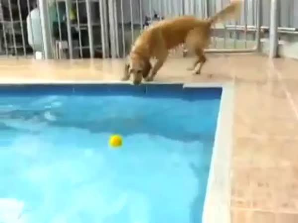 Štěně loví míček