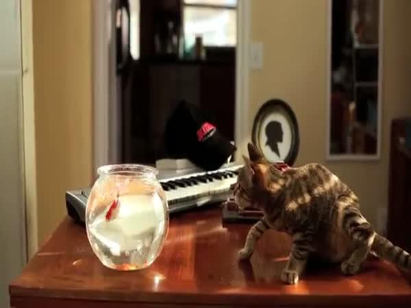 Jedi- kotě se sílou
