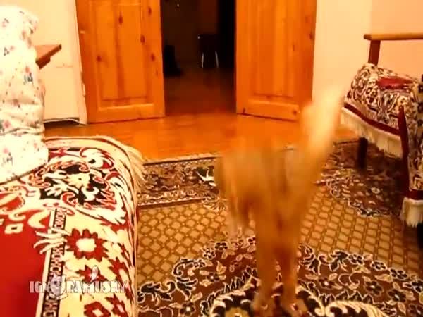 Vylekaná kočka