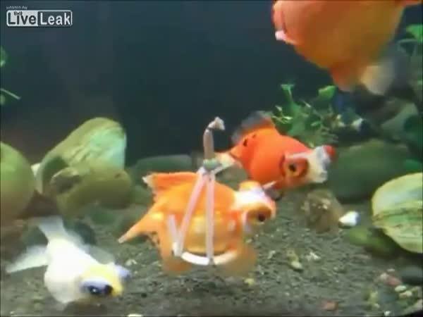 Postižená rybička