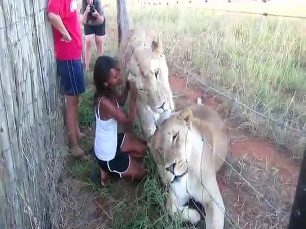 Líbání se lvy