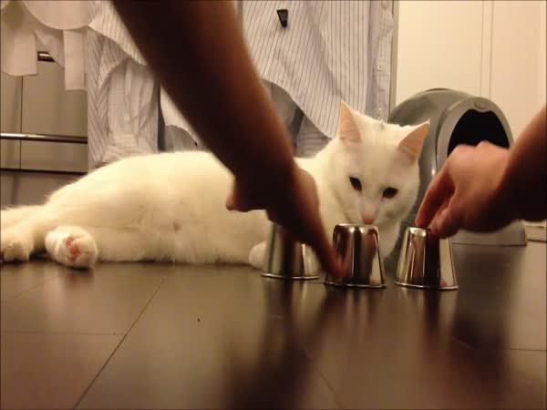 Kočka hraje skořápky