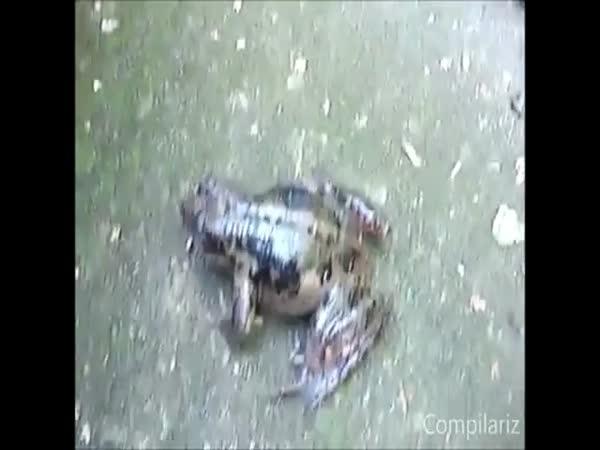 Šíleně řvoucí zvířata