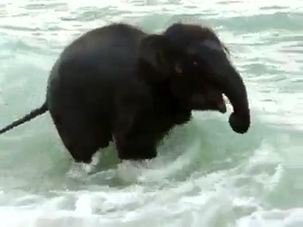 Nejšťastnější sloník na světě
