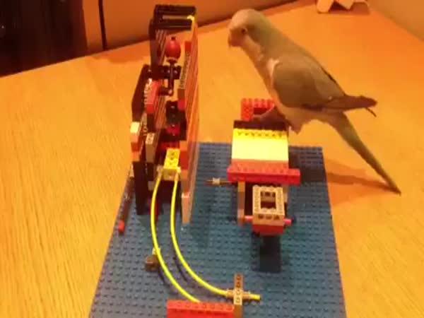 Velmi chytrý papoušek