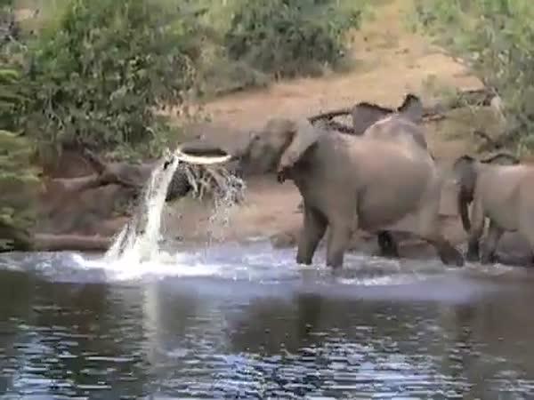 Slon vs krokodýl