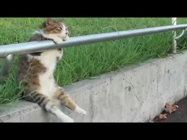 Relaxující kočka