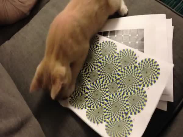 Kočka vs. optická iluze