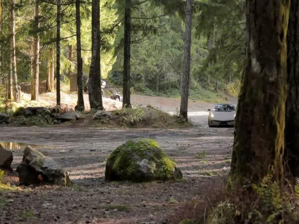 Lamborghini Gallardo v lese