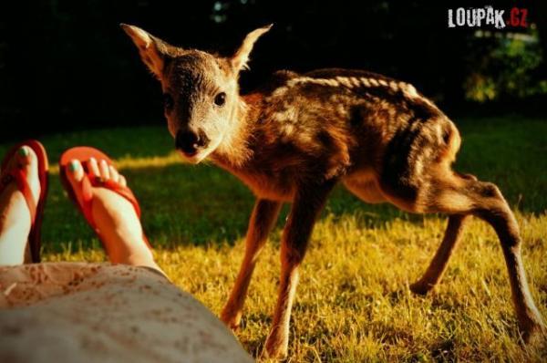OBRÁZKY - Ze života zvířátek 58.díl