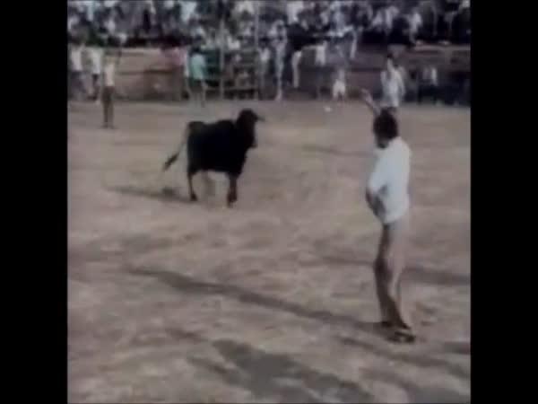 Když zvířata zaútočí na lidi