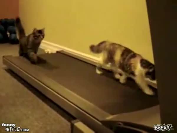 Kočky na běžeckém pásu