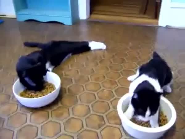 Kočky po návštěvě veterináře
