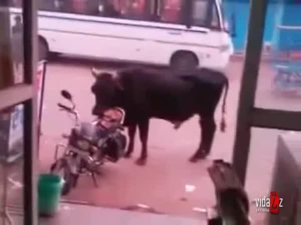 Když to příjde na býka