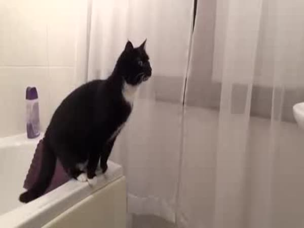 Udivená kočka