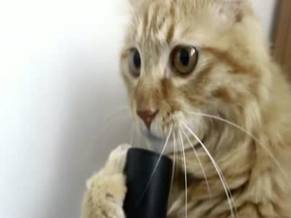 Zábavná kočka s vysavačem