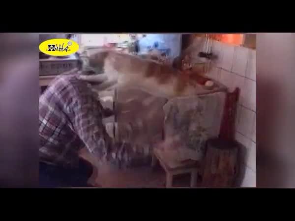 Když zvířata zaútočí na lidi #2