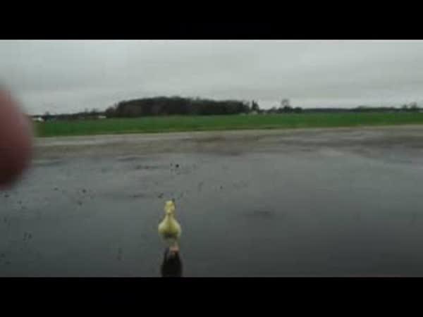Kačka blátotlačka