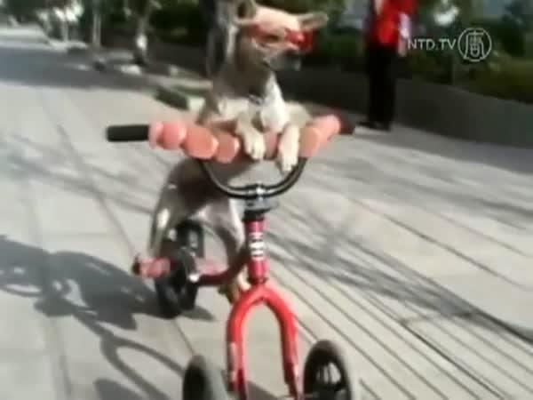 Zvířátka na kolech