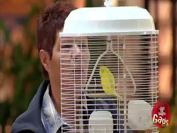 Nachytávka - Čůrající papoušek