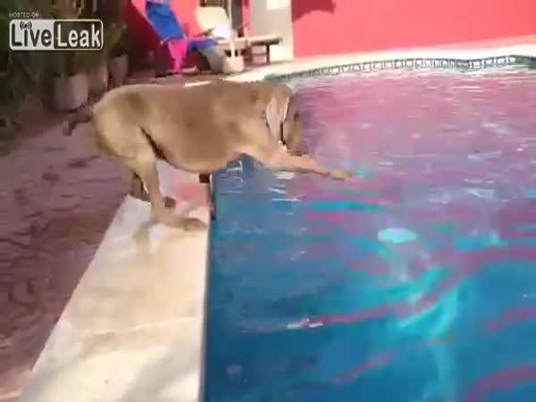 Pejsek a frisbee