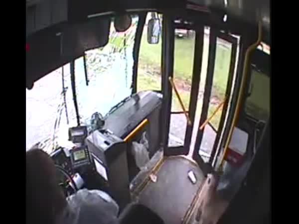 Autobus vs srnka