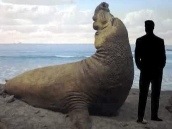 TOP 25 1.díl - Největší zvířata světa