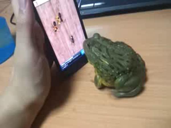 Žába hraje hru na telefonu