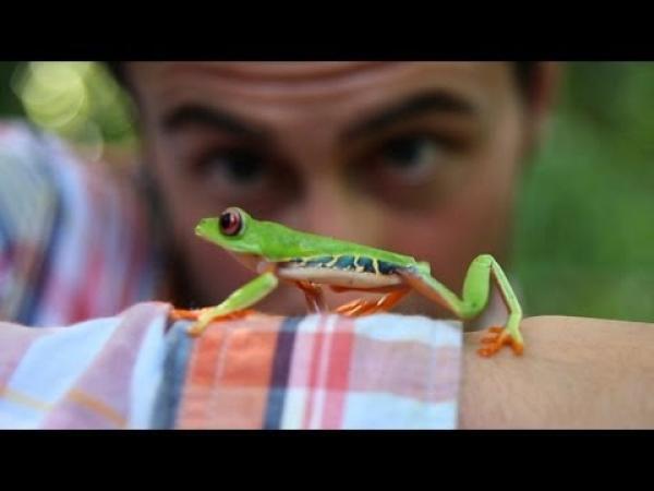 Sleduj žábu