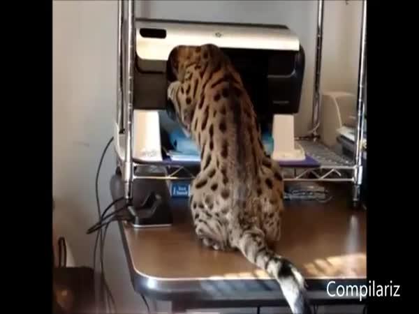 Kočičky vs. tiskárny