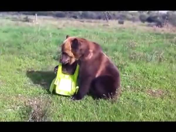 Cirkusový medvěd